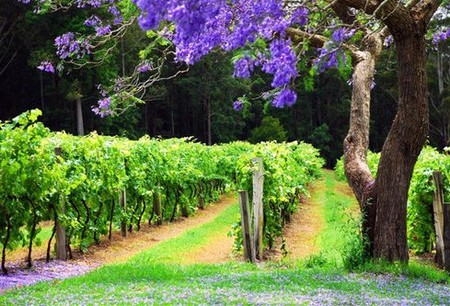 Bago Vineyards - Accommodation Redcliffe