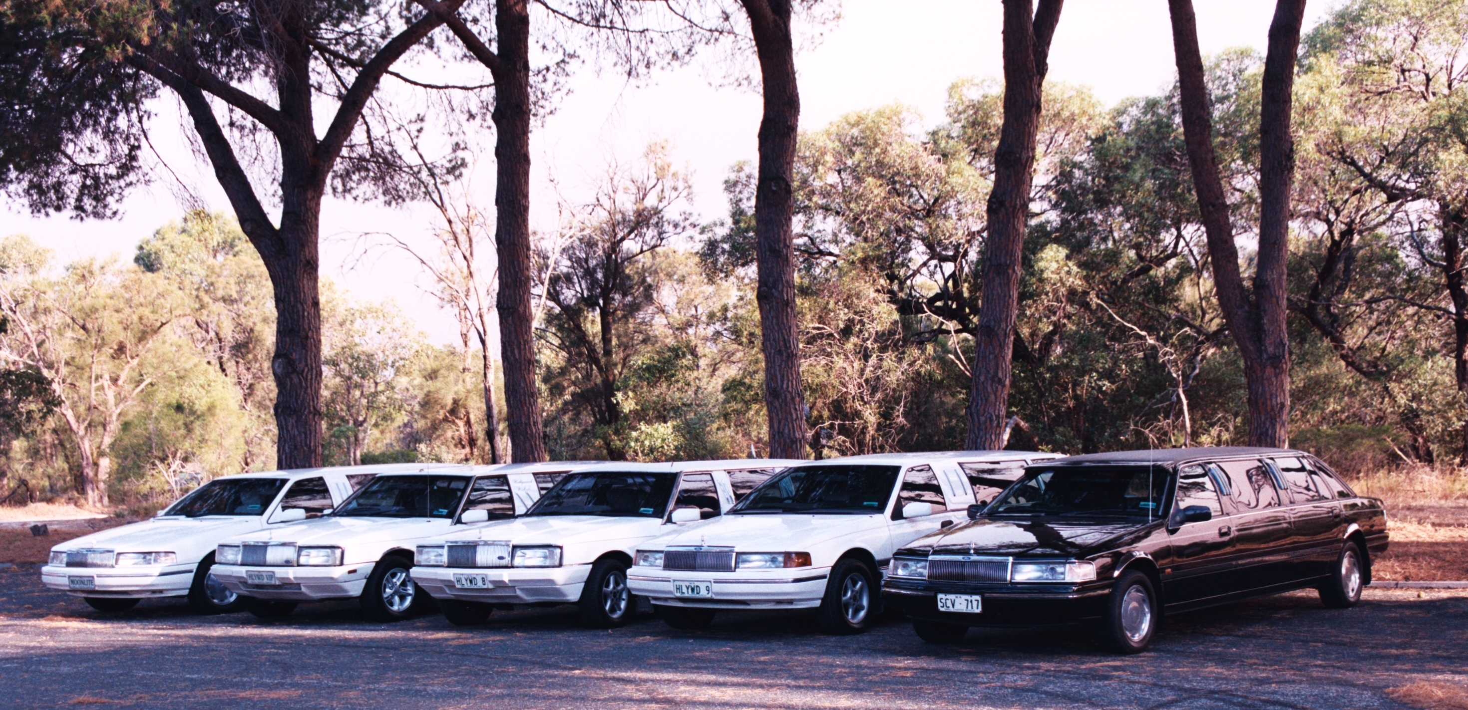 Hollywood VIP Limousines - Accommodation Redcliffe