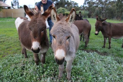 Donkey Tales Farm Cottages - Accommodation Redcliffe