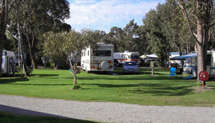 Pinjarra Caravan Park - Accommodation Redcliffe