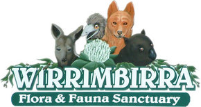 Wirrimbirra Sanctuary - Accommodation Redcliffe