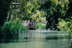 Cleland Wildlife Park - Accommodation Redcliffe