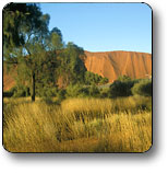 Uluru - Kata Tjuta National Park - Accommodation Redcliffe