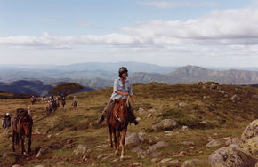 High Country Horses - Accommodation Redcliffe