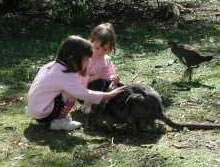Urimbirra Wildlife Park - Accommodation Redcliffe