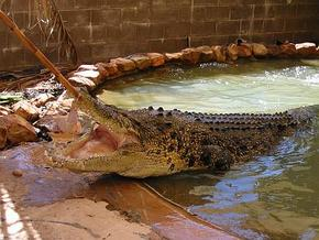 Wyndham Zoological Gardens and Crocodile Park - Accommodation Redcliffe