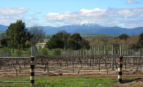 Buller View Wines - Accommodation Redcliffe