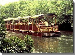 Daintree Rainforest River Trains - Accommodation Redcliffe
