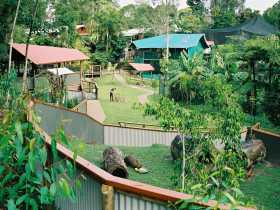 Kuranda Koala Gardens - Accommodation Redcliffe