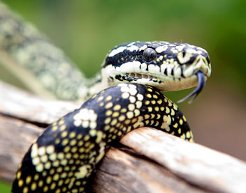 Reptile Encounters - Accommodation Redcliffe