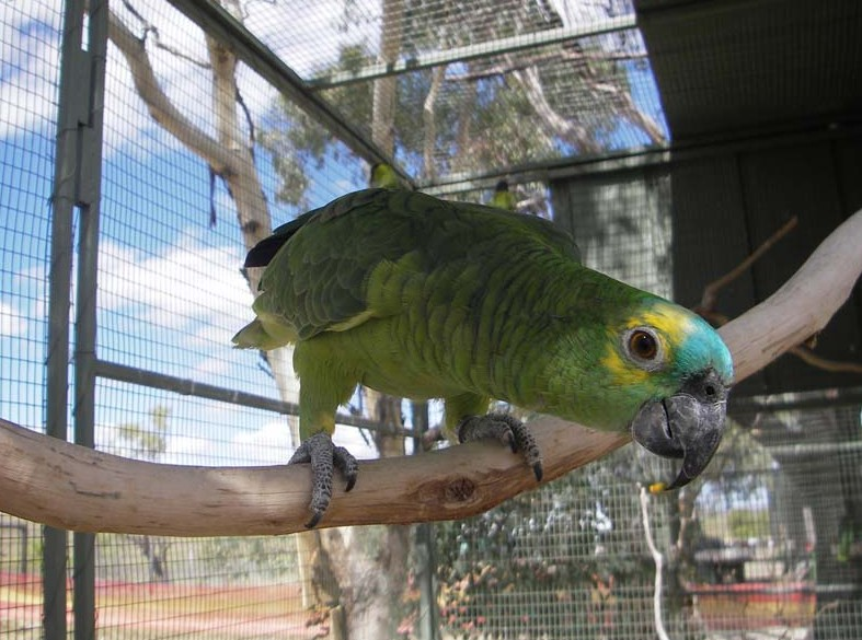 Darling Downs Zoo - Accommodation Redcliffe
