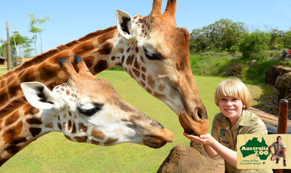 Australia Zoo - Accommodation Redcliffe