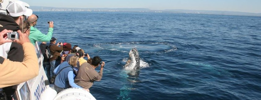 Australian Whale Watching - Accommodation Redcliffe