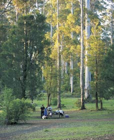 Big Brook Arboretum - Accommodation Redcliffe