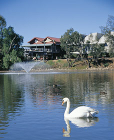 White Swans - Accommodation Redcliffe