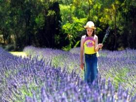 Brayfield Park Lavender Farm - Accommodation Redcliffe
