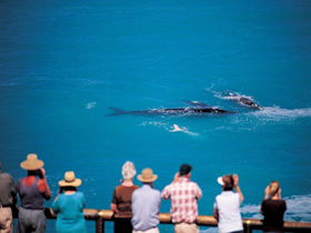 Whale Watching At Head Of Bight - Accommodation Redcliffe
