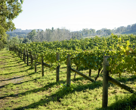 Surveyor's Hill Vineyards - Accommodation Redcliffe