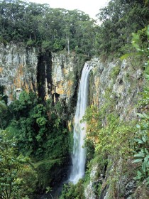 Gondwana Rainforests of Australia - Accommodation Redcliffe