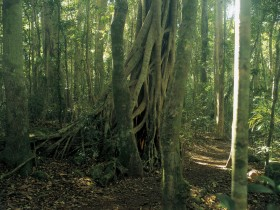 Lamington National Park Binna Burra Section - Accommodation Redcliffe