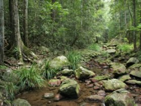 Amamoor State Forest - Accommodation Redcliffe