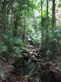 Mossman Gorge Rainforest Circuit Track Daintree National Park - Accommodation Redcliffe