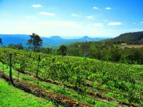 Preston Peak Wines - Accommodation Redcliffe