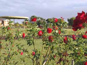 Elizabeth Park Rose Gardens - Accommodation Redcliffe