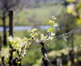 Elan Vineyard and Winery - Accommodation Redcliffe