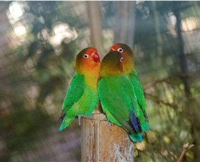 Ballarat Bird World - Accommodation Redcliffe
