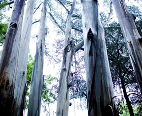 Dandenong Ranges National Park - Accommodation Redcliffe