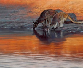 Steve Morvell Wildlife Art - Accommodation Redcliffe