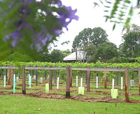 Douglas Vale Historic Homestead  Vineyard - Accommodation Redcliffe