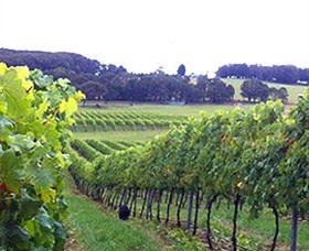 Banjo's Run Winery and Vineyard - Accommodation Redcliffe