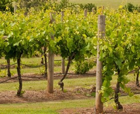 Mt Coghill Vineyard - Accommodation Redcliffe