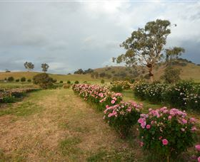 Damasque Rose Oil Farm - Accommodation Redcliffe