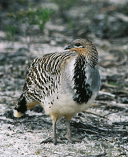 Yongergnow Australian Malleefowl Centre - Accommodation Redcliffe