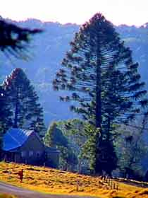 Bunya Mountains National Park - Accommodation Redcliffe