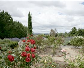 Crystal Brook Lavender Farm - Accommodation Redcliffe