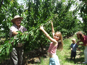Forest Range Cherries - Accommodation Redcliffe