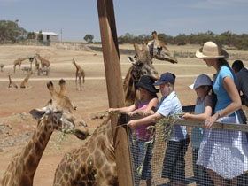 Monarto Open Range Zoo - Accommodation Redcliffe