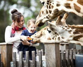 Taronga Western Plains Zoo Dubbo - Accommodation Redcliffe