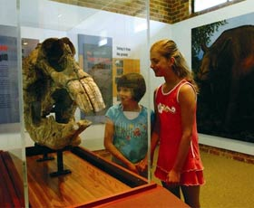 Australian Museum Diprotodon Exhibition - Accommodation Redcliffe