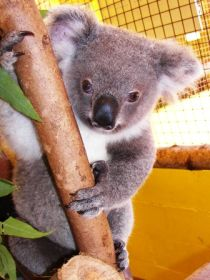 Cooberrie Park Wildlife Sanctuary - Accommodation Redcliffe
