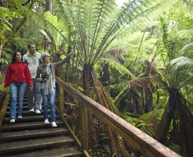 Otway Fly Treetop Adventures - Accommodation Redcliffe