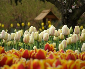 Tulip Top Gardens - Accommodation Redcliffe