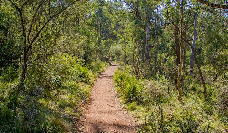 Mares Forest Creek walking track - Accommodation Redcliffe