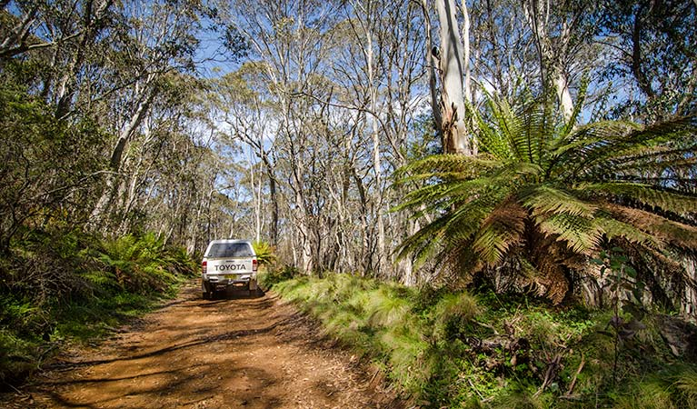Barrington trail - Accommodation Redcliffe