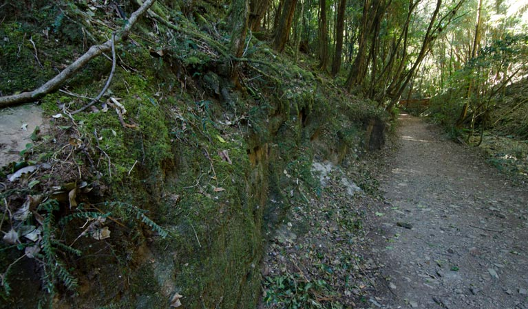 Hidden Treasure track - Accommodation Redcliffe