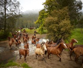 Glenworth Valley Horse Riding - Accommodation Redcliffe